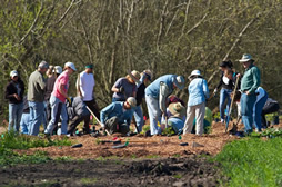 volunteers working with gardening tools in field