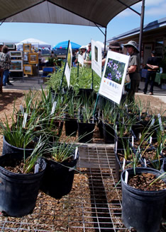 Native Plant Sale. Photo by Bambi Jones